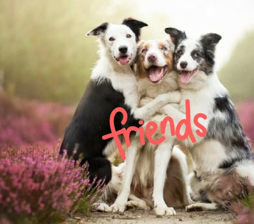 φιλία, ενσυναίσθηση, συναίσθημα, ανιδιοτέλεια, υγεία, καρδιά, ψυχική υγεία, μοναξιά, απομόνωση, κατάθλιψη, ευτυχία